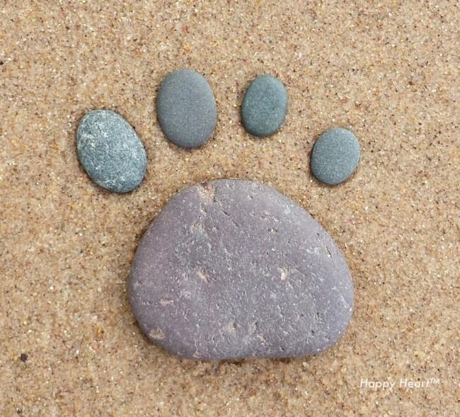 Paw Rocks
